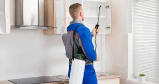 طرق فعالة للتخلص من الحشرات المنزلية