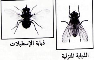 طرق مكافحة ذبابة الخيل